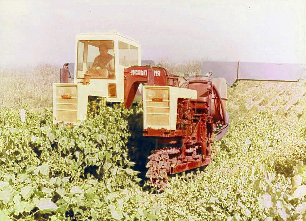 Арочный трактор для виногадников